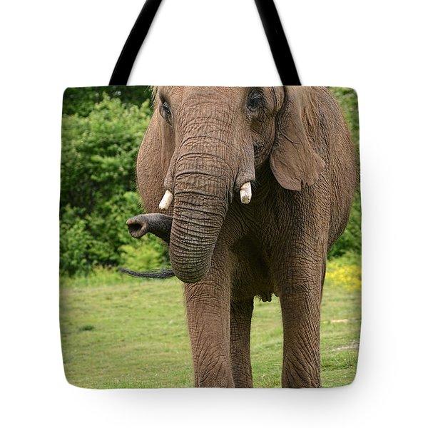 Let's Take A Walk Tote Bag by Wanda Krack