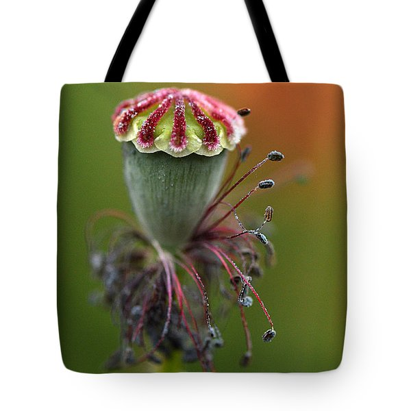 Life's Fruit Tote Bag by Simona Ghidini