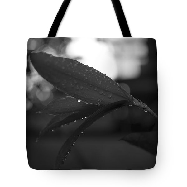 Tote Bag featuring the photograph Light And Dark by Miguel Winterpacht