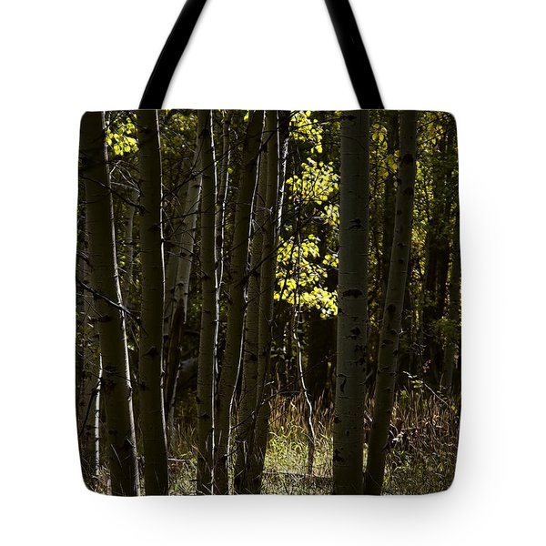 Light And  Shadows D0468 Tote Bag by Wes and Dotty Weber
