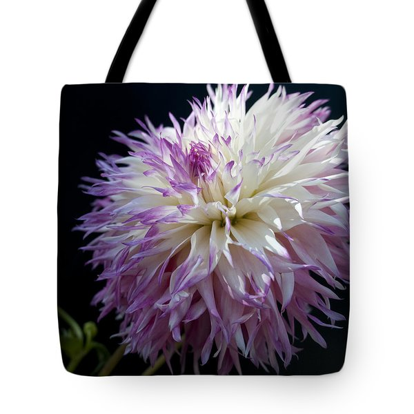 Tote Bag featuring the photograph Light Dance by Haleh Mahbod
