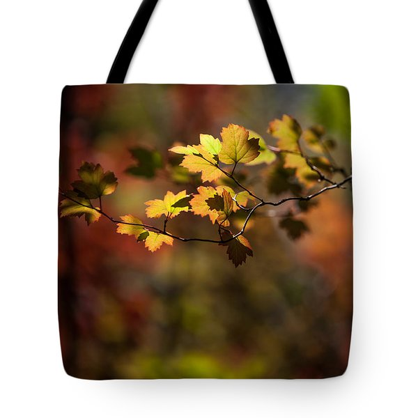Lightly Falling Tote Bag by Aaron Aldrich