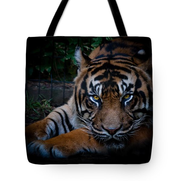 Like My Eyes? Tote Bag by Robert L Jackson