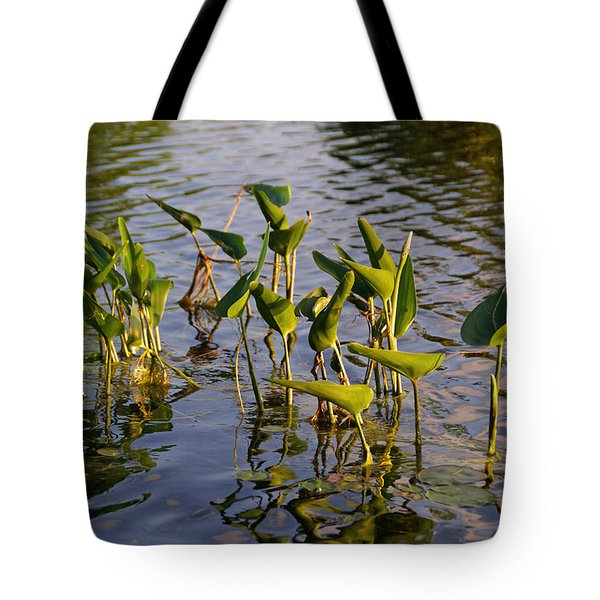 Lillies In Evening Glory Tote Bag