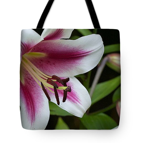 Tote Bag featuring the photograph Lily Star Gazer - Lis 'star Gazer' by Nature and Wildlife Photography