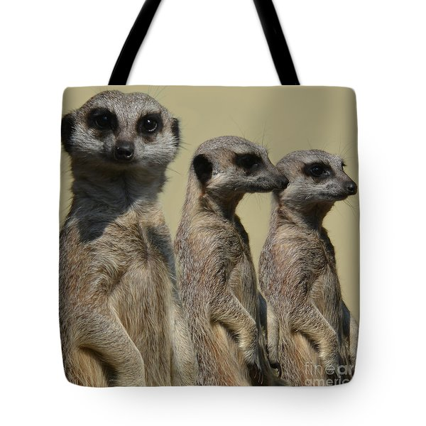 Line Dancing Meerkats Tote Bag by Paul Davenport