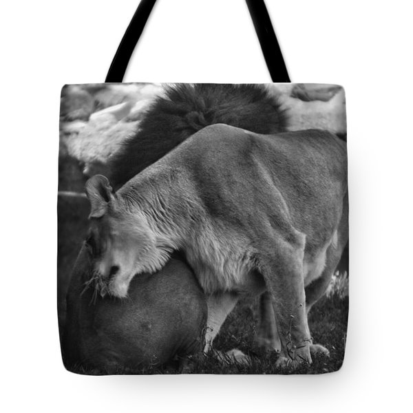 Lion Hugs In Black And White Tote Bag by Thomas Woolworth