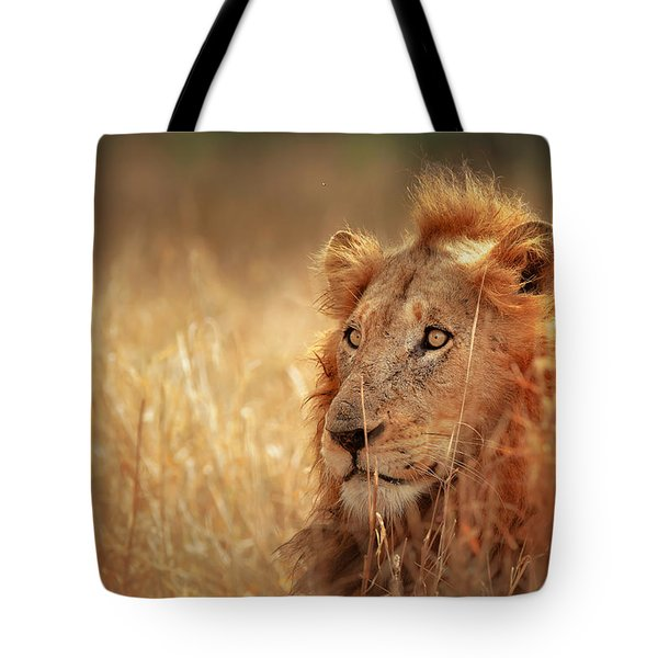 Lion In Grass Tote Bag by Johan Swanepoel