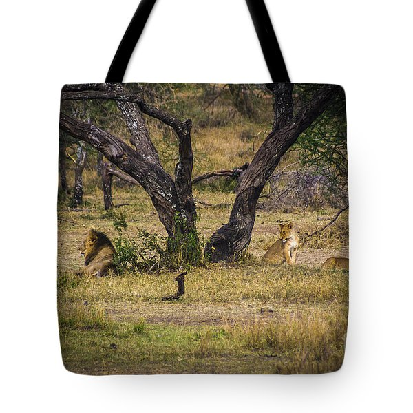 Lion In The Dog House Tote Bag by Darcy Michaelchuk