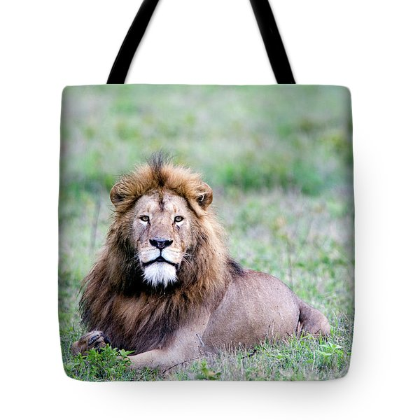 Lion Panthera Leo Relaxing In A Field Tote Bag