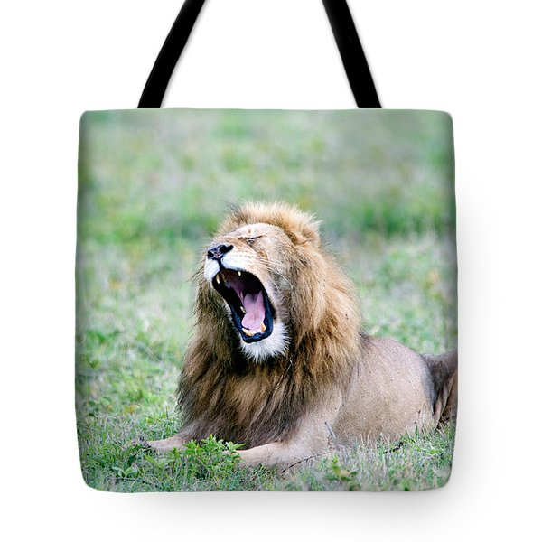 Lion Panthera Leo Yawning In A Field Tote Bag