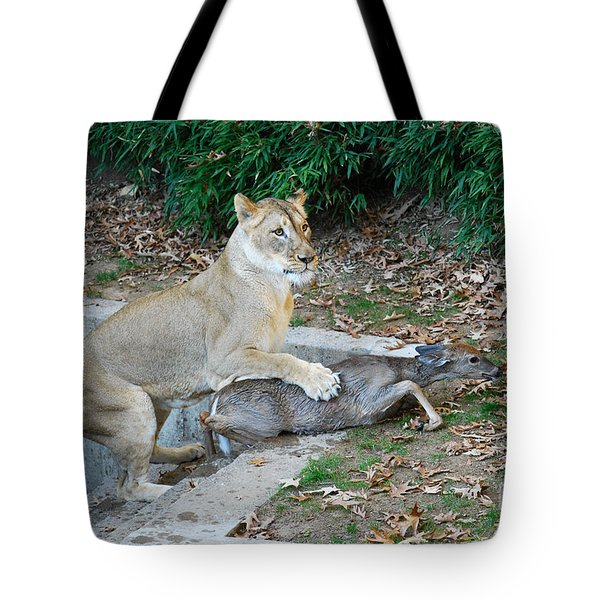 Tote Bag featuring the photograph Lioness And Deer by Eva Kaufman