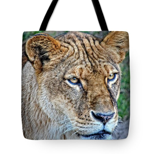 Lioness Deep In Thought Hdr Tote Bag