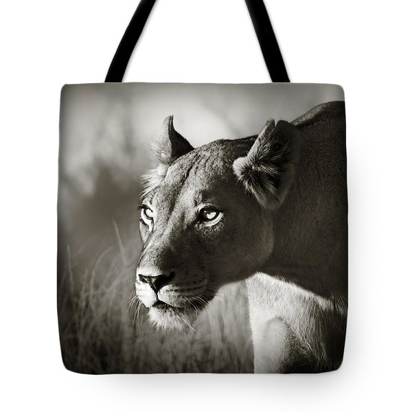 Lioness Stalking Tote Bag by Johan Swanepoel