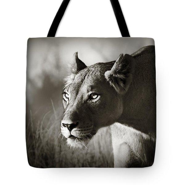 Lioness Stalking Tote Bag