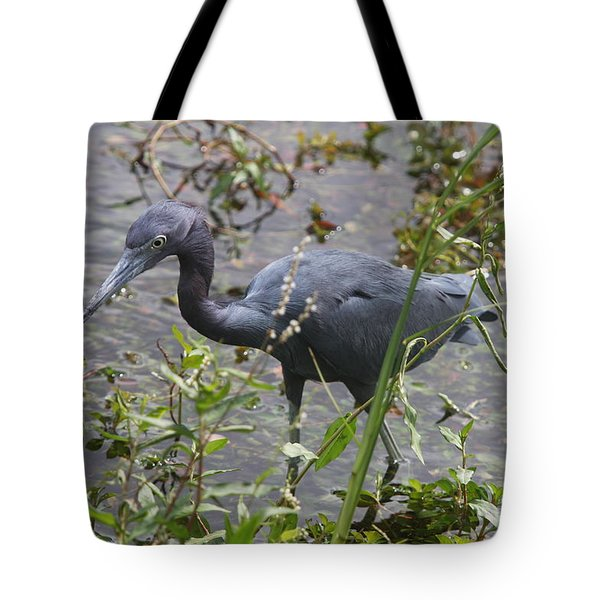 Tote Bag featuring the photograph Little Blue Heron - Waiting For Prey by Christiane Schulze Art And Photography