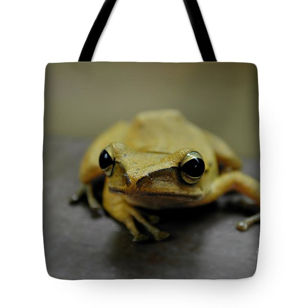 Little Frog Tote Bag by Michelle Meenawong