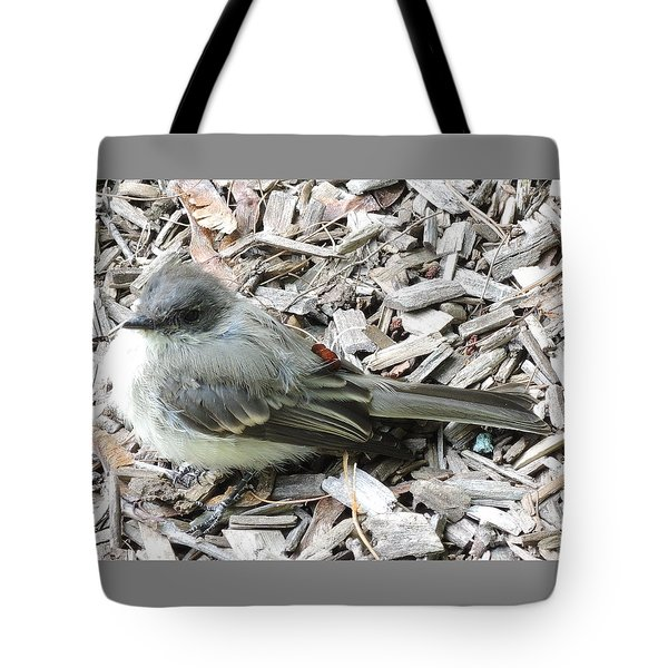 Little Junco Tote Bag by Chrissey Dittus