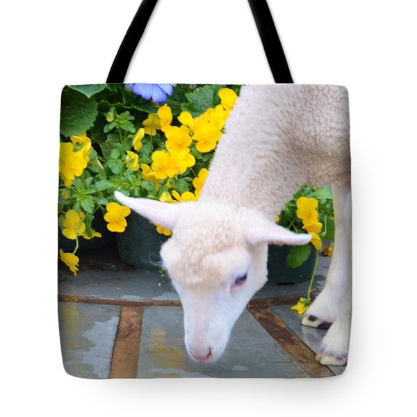 Little Lamb Tote Bag by Kathleen Struckle