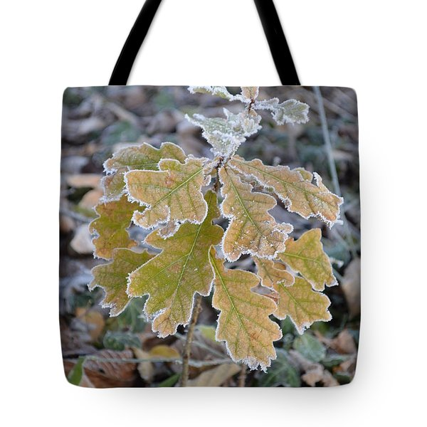Tote Bag featuring the photograph Little Oak by Felicia Tica