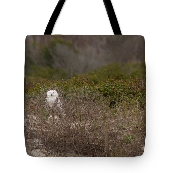 Tote Bag featuring the photograph Little Talbot Snowbird by Paul Rebmann