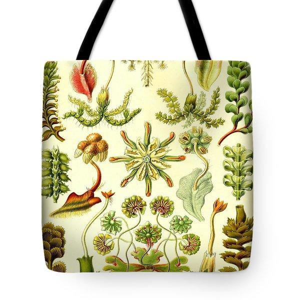 Liverworts Moss Brunnenlebermoos Haeckel Hepaticae Tote Bag