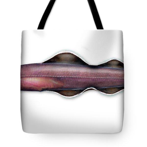 Living Fossil Eel - Protoanguilla Palau - Anguilliformes - Lateral Organ - Seitenlinienorgan Tote Bag
