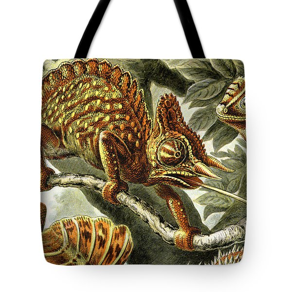Lizard Detail I Tote Bag by Unknown