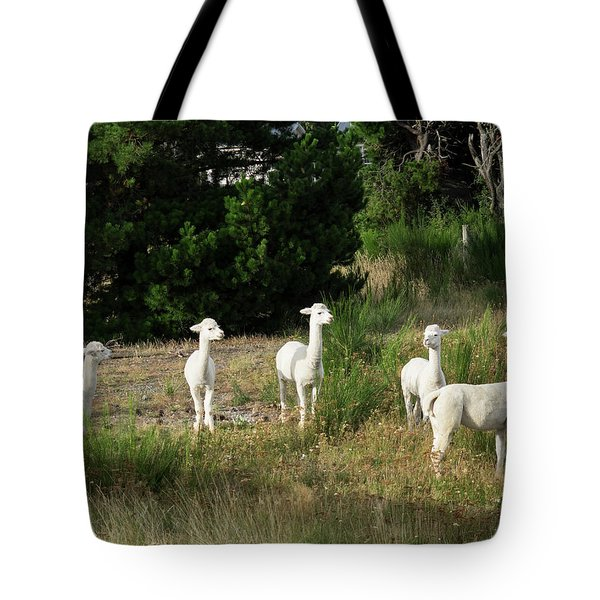 Llamas Standing In A Forest Tote Bag by Panoramic Images