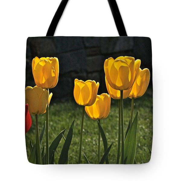 Lollipop Tulips And Grass And Stone Wall Tote Bag by Byron Varvarigos