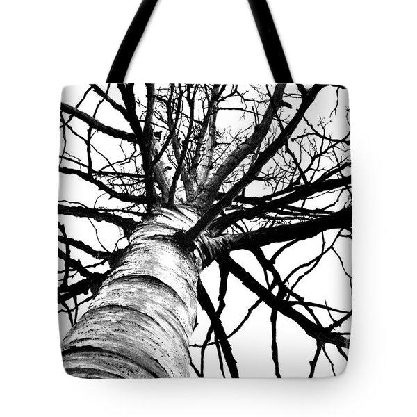 Lone Birch Tote Bag