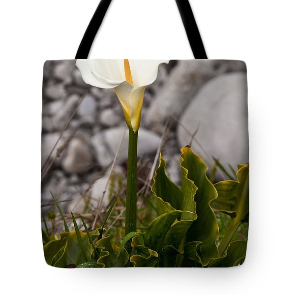 Lone Calla Lily Tote Bag by Melinda Ledsome