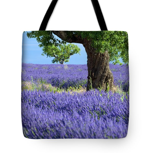 Lone Tree In Lavender Tote Bag