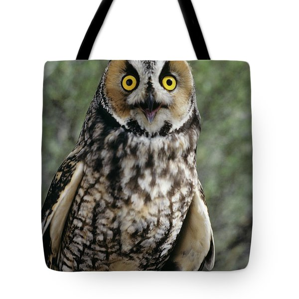 Long Eared Owl Asio Otis Europe, Asia Tote Bag