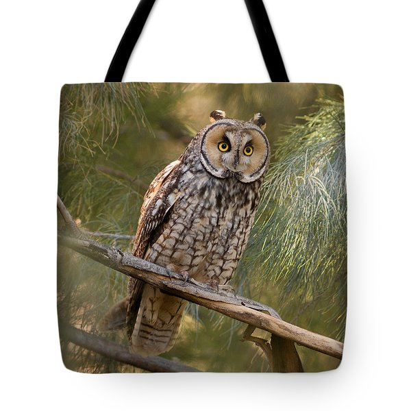 Long-eared Owl Tote Bag