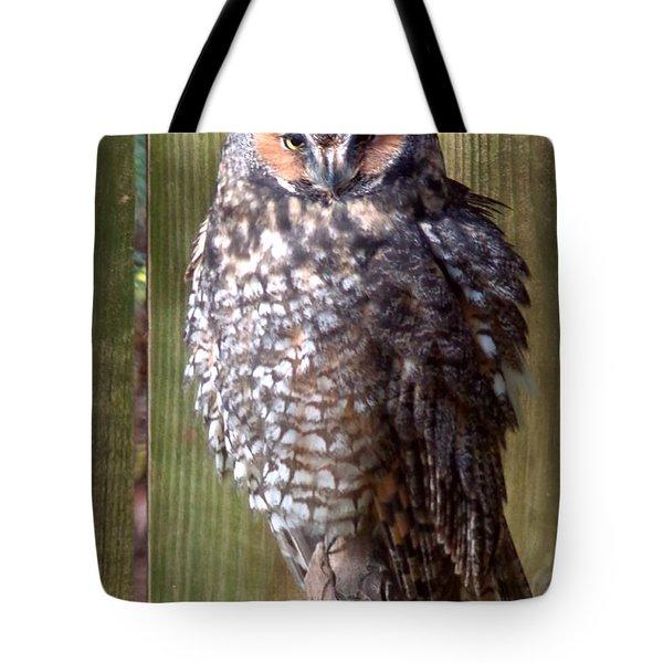 Tote Bag featuring the photograph Long Eared Owl by Joseph Skompski