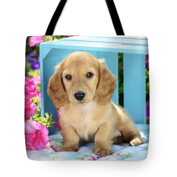 Long Eared Puppy In Front Of Blue Box Tote Bag by Greg Cuddiford