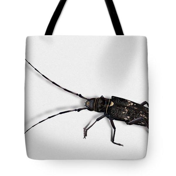 Long-hornded Wood Boring Beetle Monochamus Sartor - Coleoptere Monochame Tailleur - Tote Bag