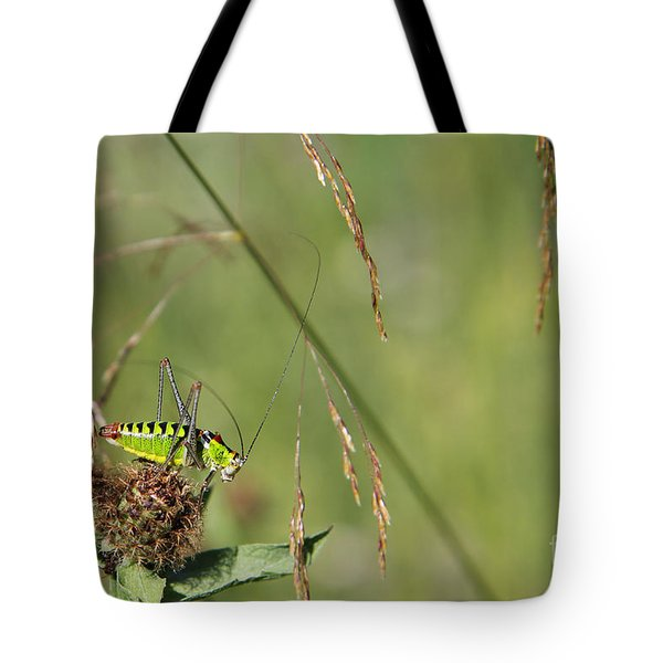 Tote Bag featuring the photograph Long-horned Katydid by Jivko Nakev