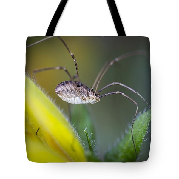 Long Sexy Legs Tote Bag