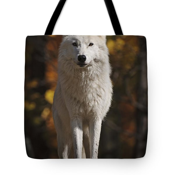 Tote Bag featuring the photograph Look Out by Wolves Only