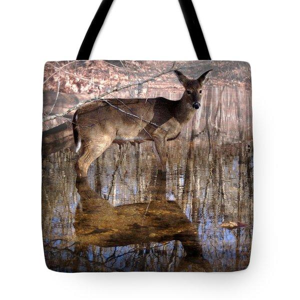 Looking Cute Tote Bag by Bill Stephens