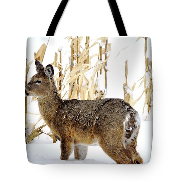Looking For A Bite To Eat Tote Bag by Dacia Doroff