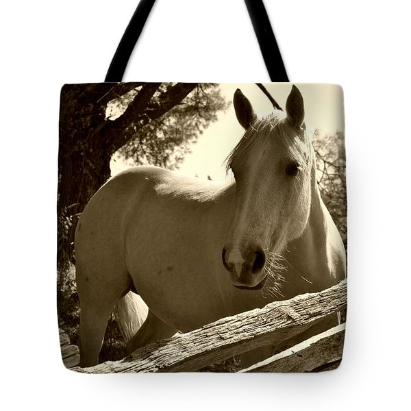 Tote Bag featuring the photograph Looking For A Handout by Kelly Nowak