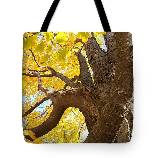 Looking Up The Maple Tree Tote Bag