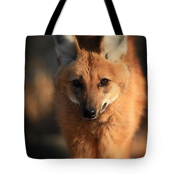 Looks Like A Fox Tote Bag by Karol Livote