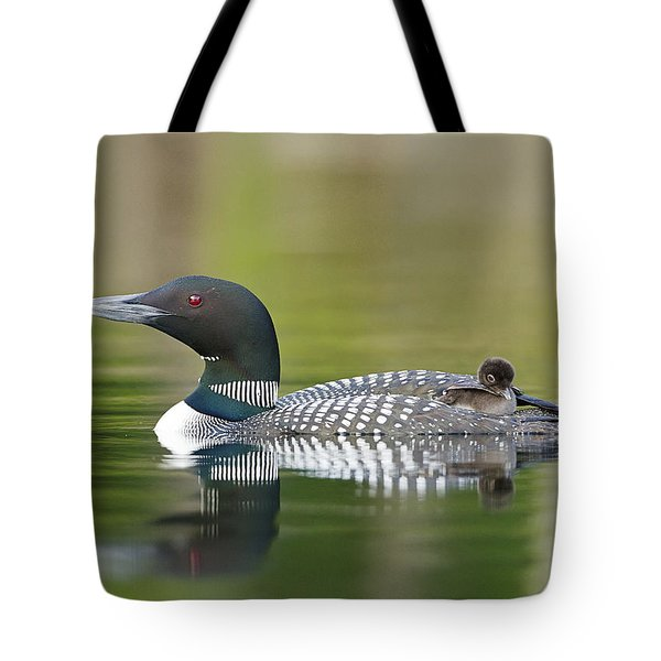Loon Chick With Parent - Quiet Time Tote Bag
