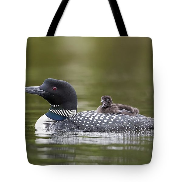 Loon Chick Yawn Tote Bag