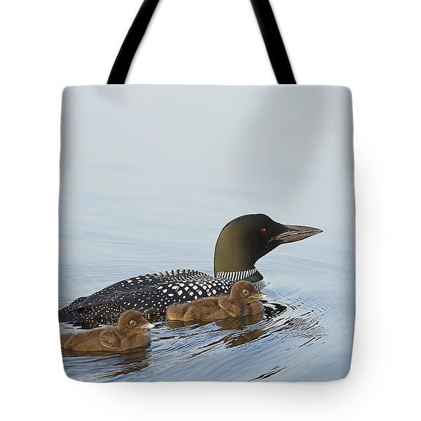 Loon Chicks Cruising With Mom Tote Bag