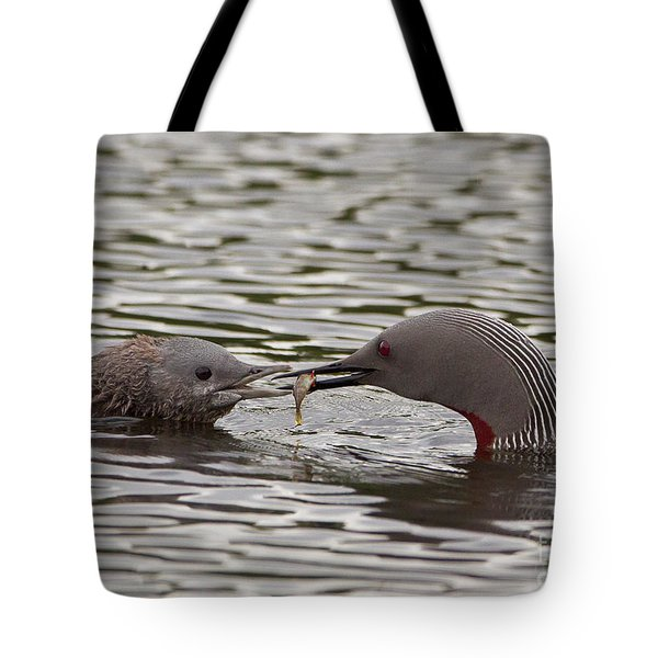 Loon Feeding Chick Tote Bag
